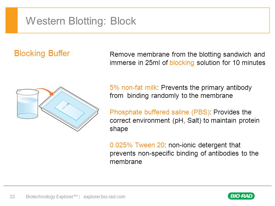 Western Blotting: Block