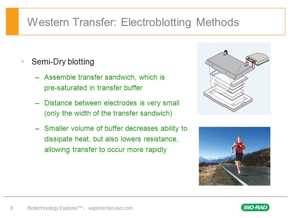 Western Transfer: Electroblotting Methods