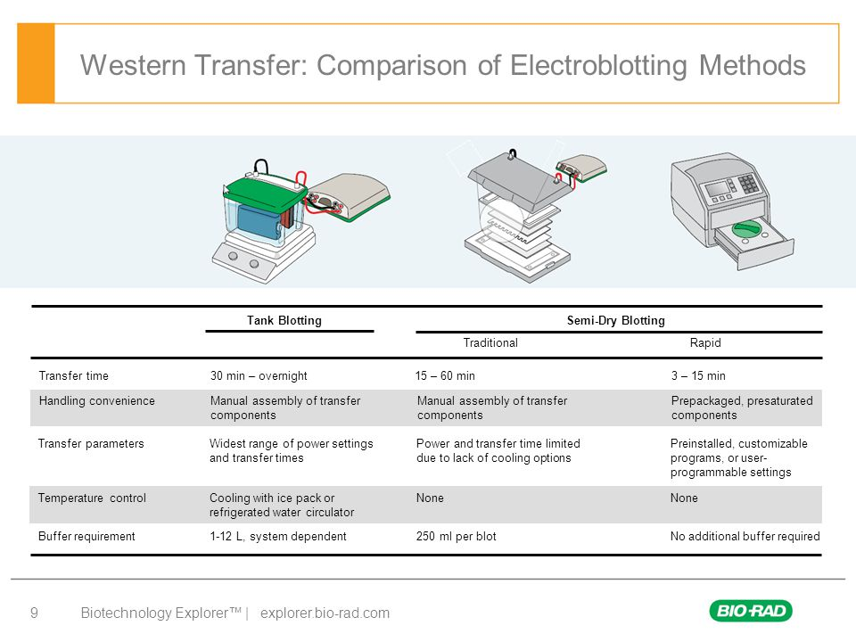 Western Transfer: Comparison of Electroblotting Methods
