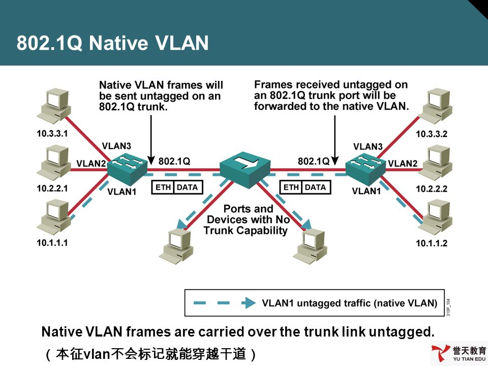 802.1Q Native VLAN Native VLAN frames are carried over the trunk link untagged. (本征vlan不会标记就能穿越干道)