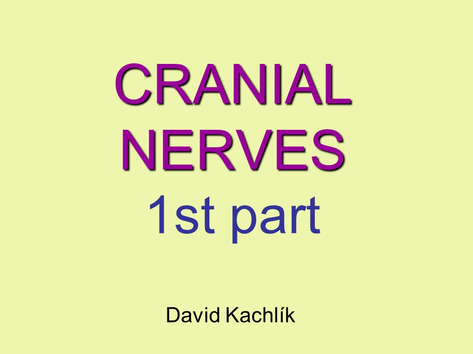 CRANIAL NERVES 1st part David Kachlík