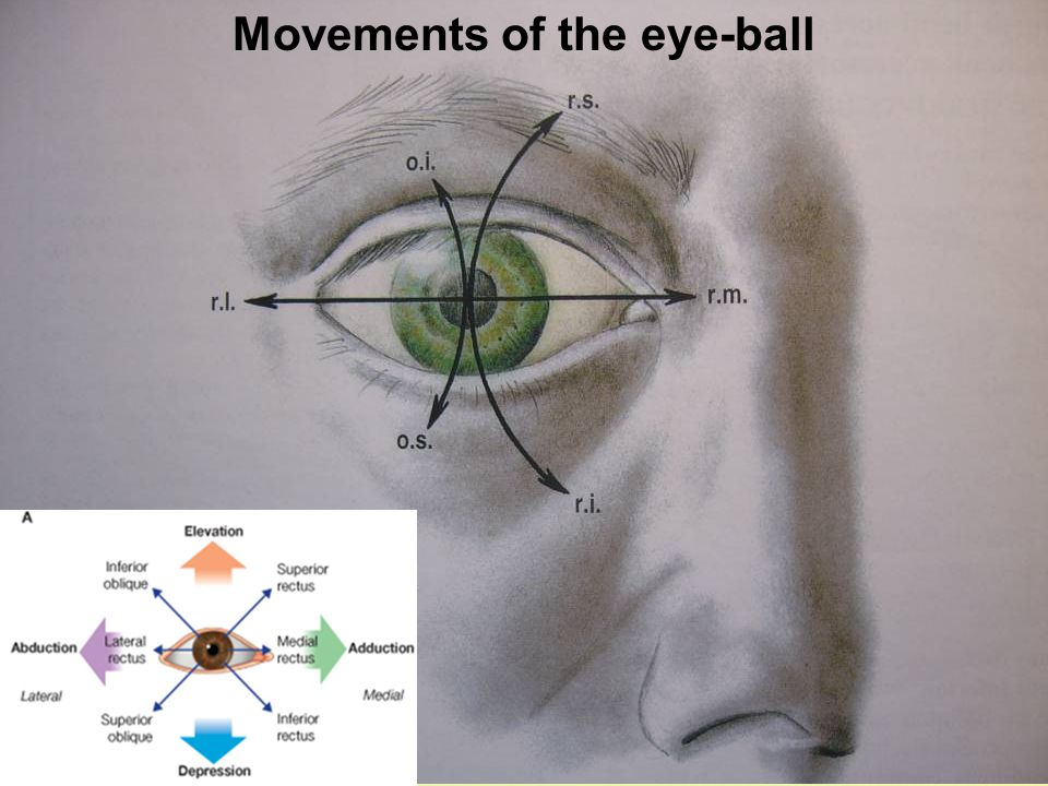 Movements of the eye-ball
