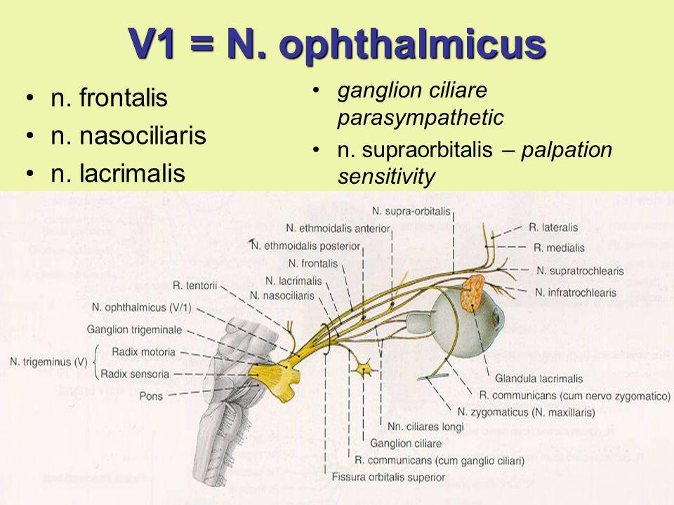 V1 = N. ophthalmicus n. frontalis n. nasociliaris n. lacrimalis