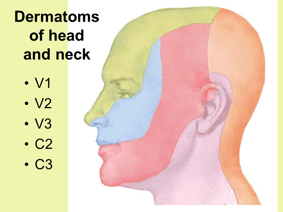 Dermatoms of head and neck