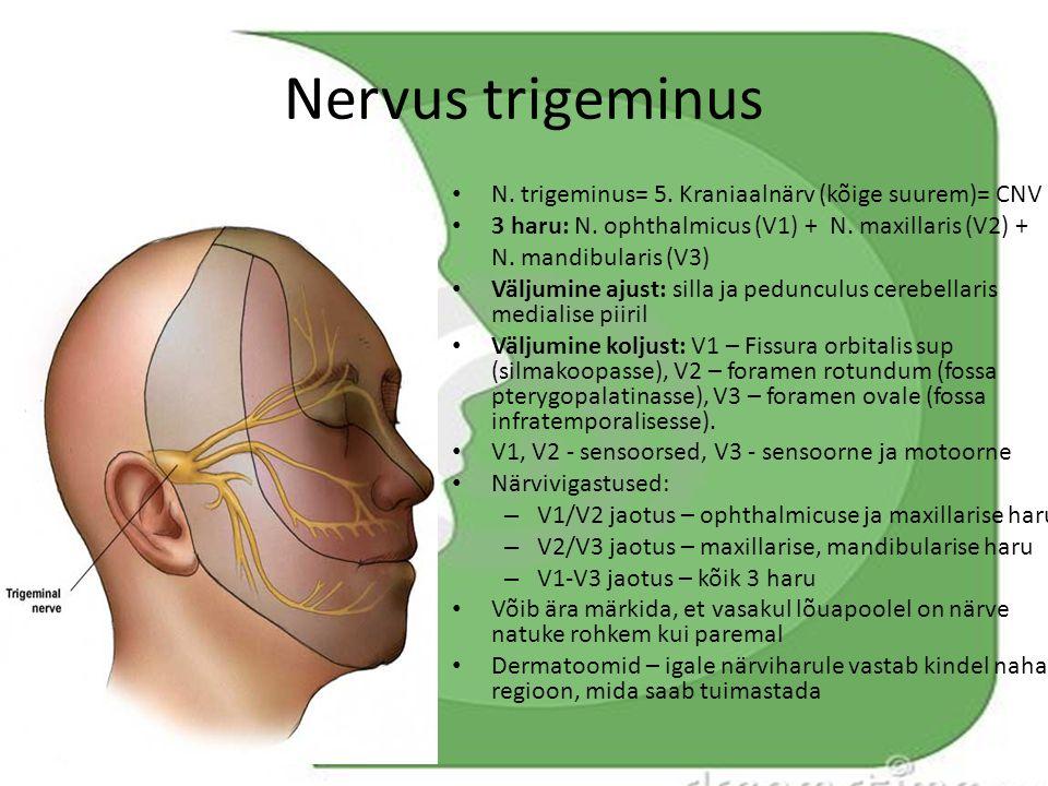 Nervus trigeminus N. trigeminus= 5. Kraniaalnärv (kõige suurem)= CNV