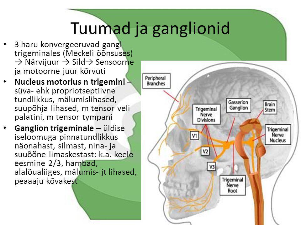 Tuumad ja ganglionid 3 haru konvergeeruvad gangl trigeminales (Meckeli õõnsuses) → Närvijuur → Sild→ Sensoorne ja motoorne juur kõrvuti.