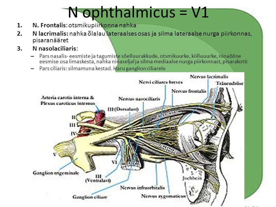 N ophthalmicus = V1 N. Frontalis: otsmikupiirkonna nahka