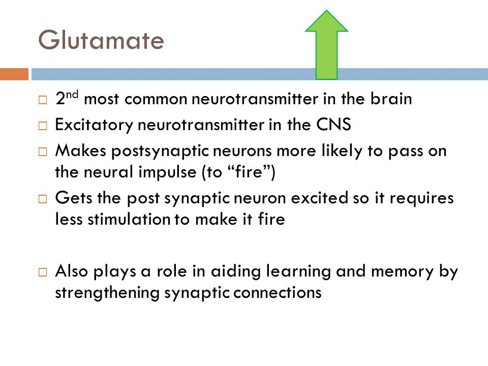 Glutamate 2nd most common neurotransmitter in the brain