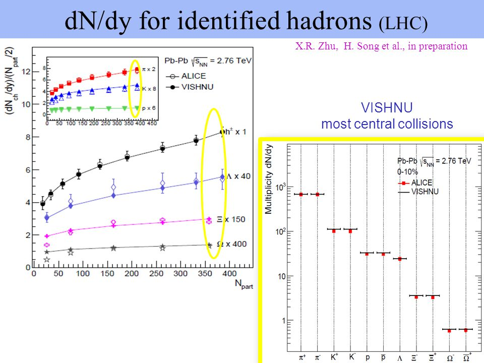 dN/dy for identified hadrons (LHC)