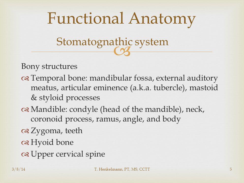 Functional Anatomy Stomatognathic system