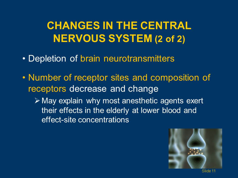 Changes in the Central Nervous System (2 of 2)