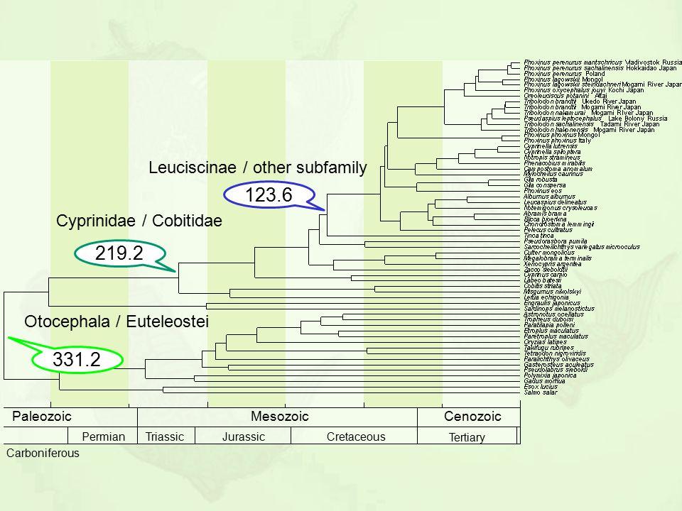 123.6 219.2 331.2 Leuciscinae / other subfamily Cyprinidae / Cobitidae