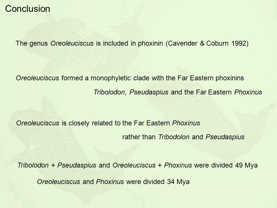 Conclusion The genus Oreoleuciscus is included in phoxinin (Cavender & Coburn 1992)