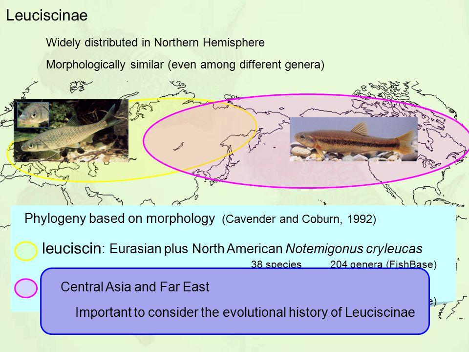 Phylogeny based on morphology (Cavender and Coburn, 1992)