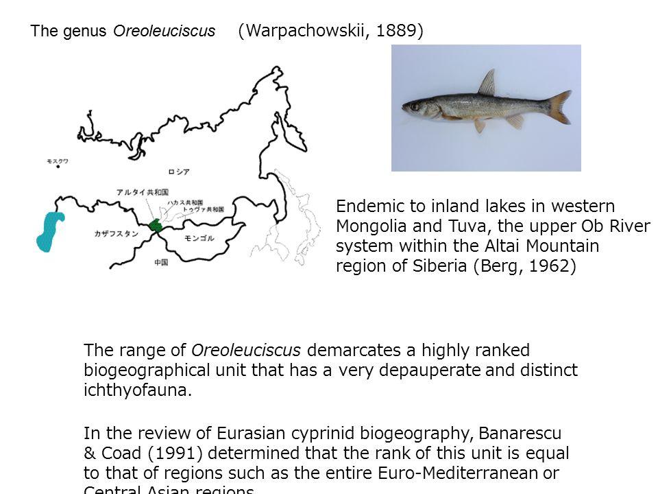 The genus Oreoleuciscus (Warpachowskii, 1889)