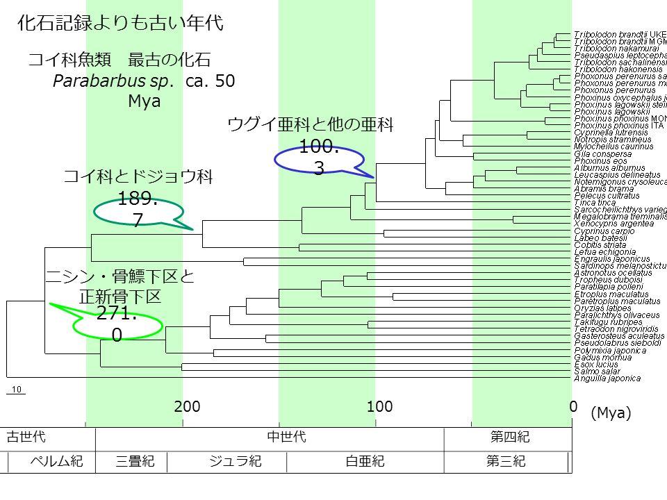 化石記録よりも古い年代 100.3 189.7 271.0 コイ科魚類 最古の化石 Parabarbus sp. ca. 50 Mya