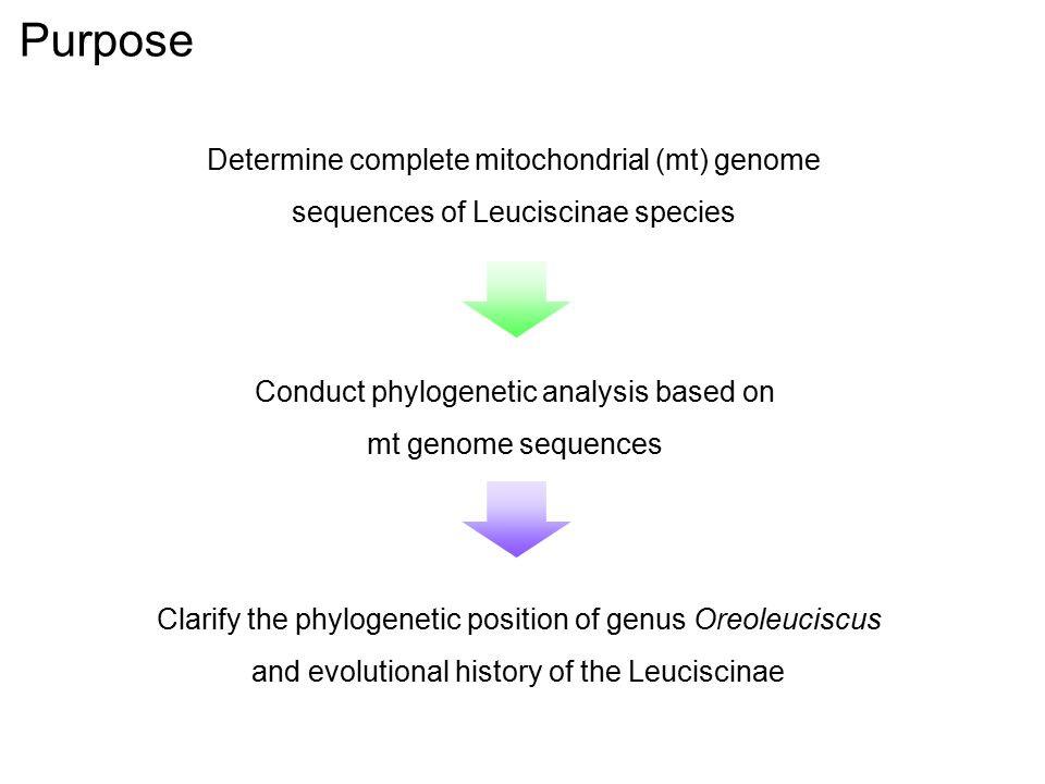 Purpose Determine complete mitochondrial (mt) genome sequences of Leuciscinae species. Conduct phylogenetic analysis based on mt genome sequences.