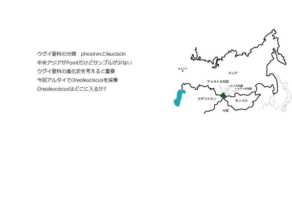 ウグイ亜科の分類 phoxininとleuciscin