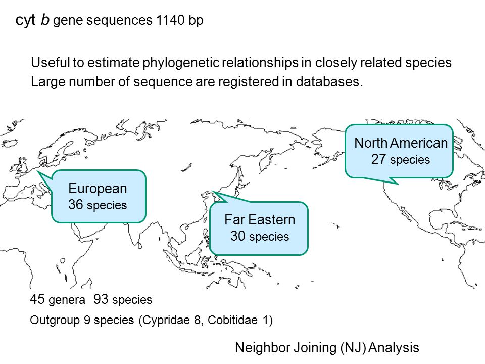 cyt b gene sequences 1140 bp Useful to estimate phylogenetic relationships in closely related species.