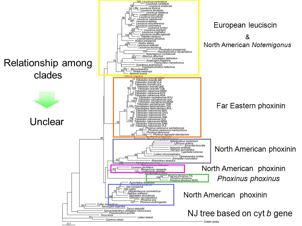 Relationship among clades