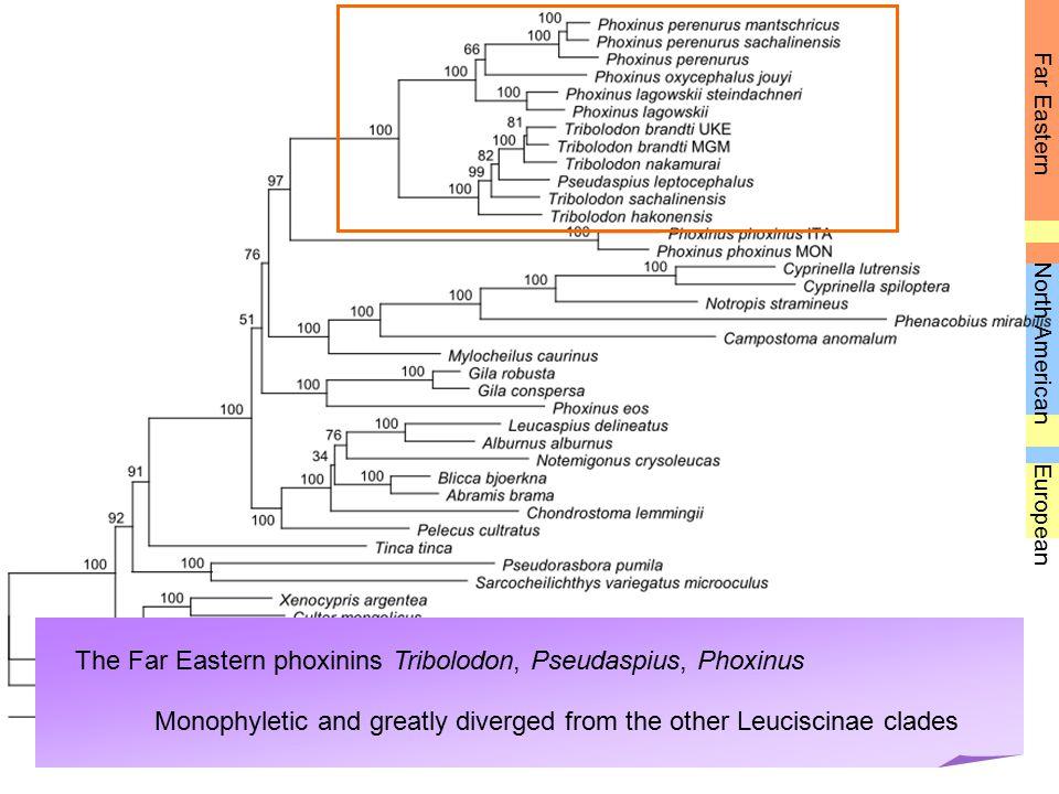 The Far Eastern phoxinins Tribolodon, Pseudaspius, Phoxinus