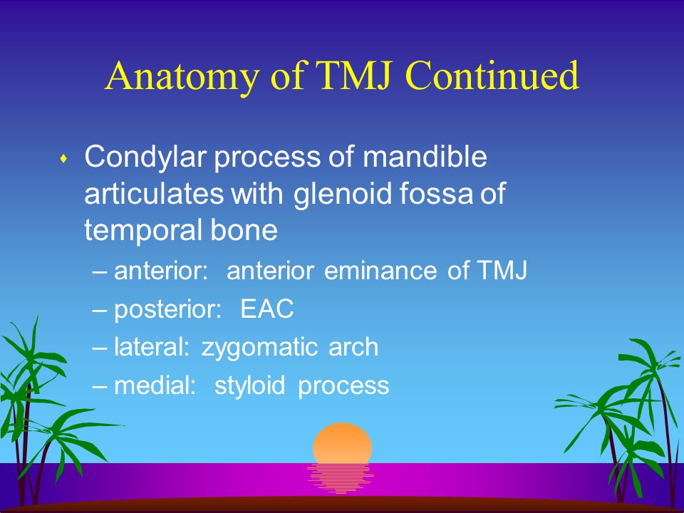 Anatomy of TMJ Continued