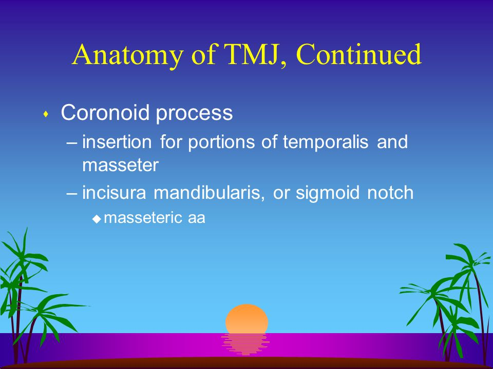 Anatomy of TMJ, Continued