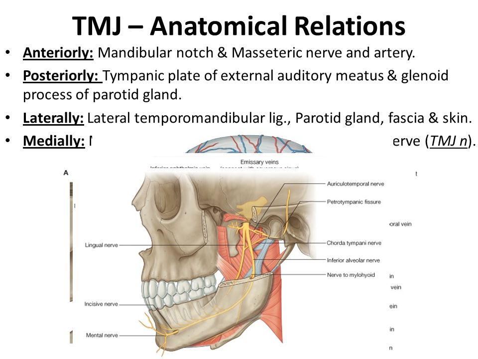 TMJ – Anatomical Relations