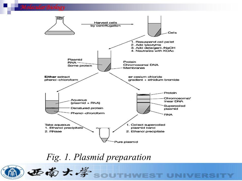 Fig. 1. Plasmid preparation