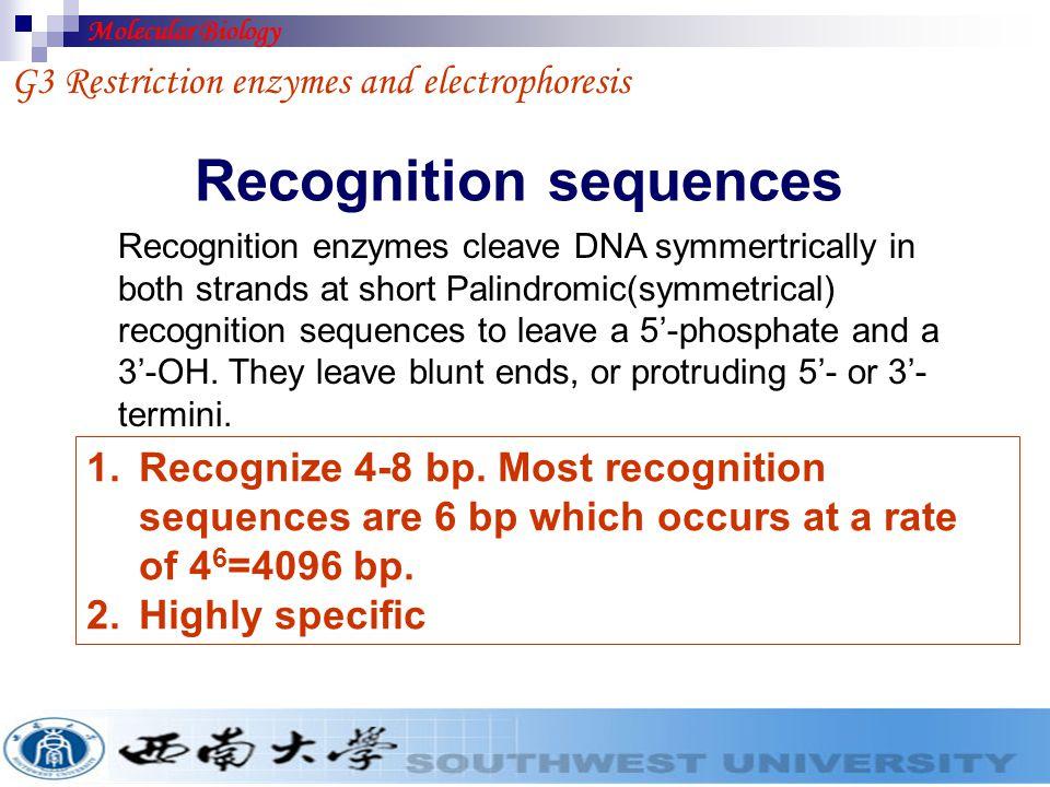 Recognition sequences