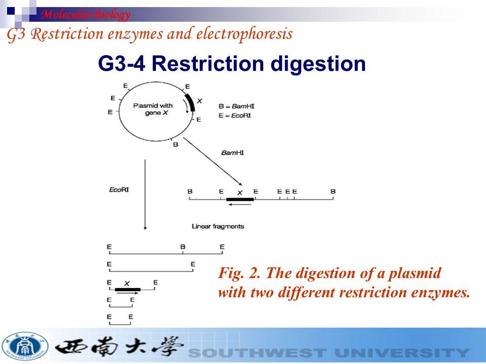 G3-4 Restriction digestion