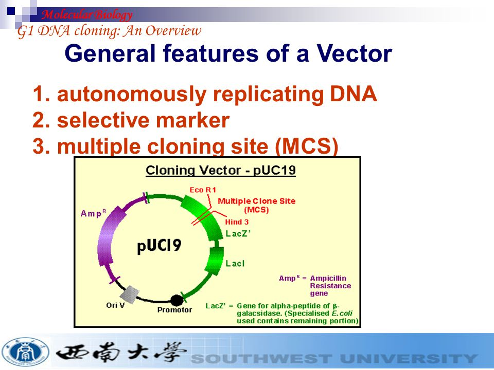 General features of a Vector