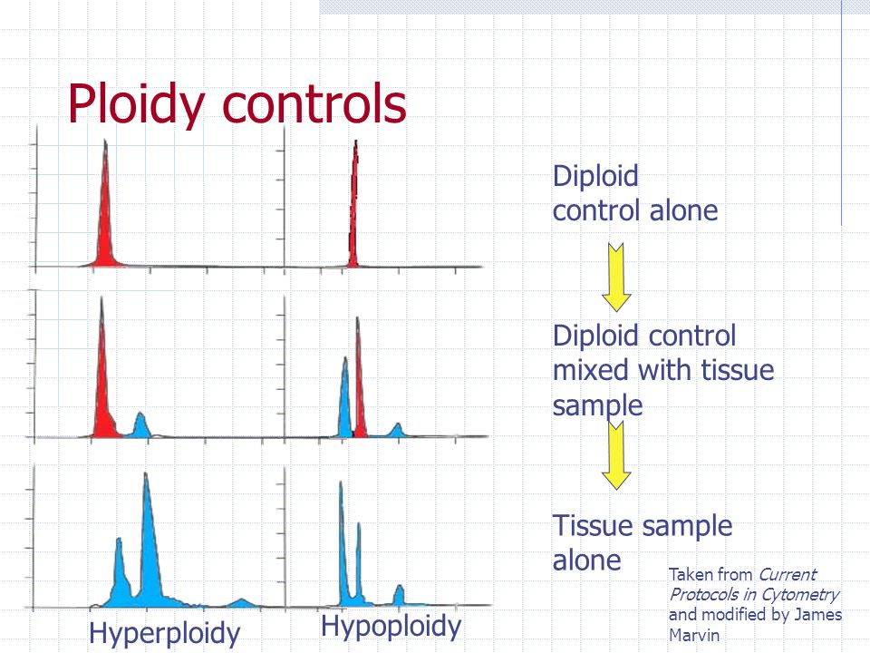 Ploidy controls Diploid control alone