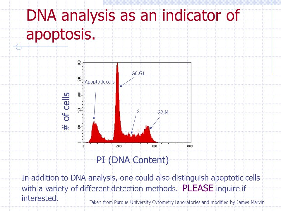 DNA analysis as an indicator of apoptosis.
