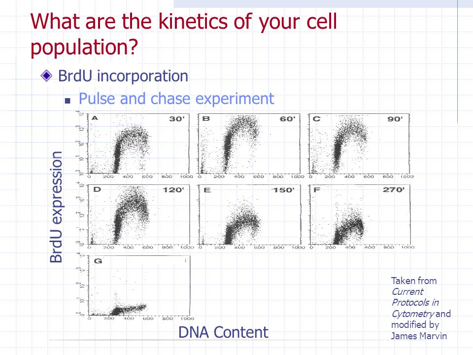 What are the kinetics of your cell population
