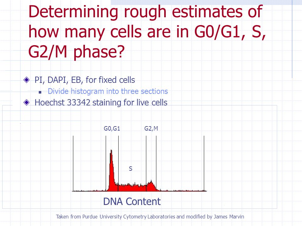 Determining rough estimates of how many cells are in G0/G1, S, G2/M phase