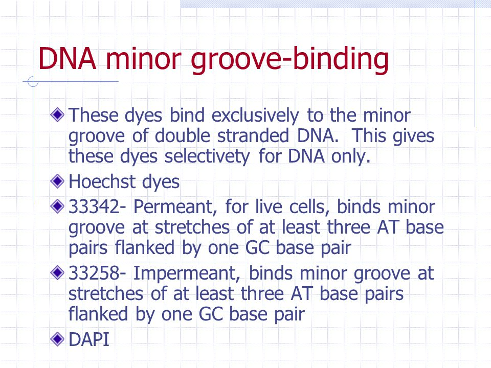 DNA minor groove-binding