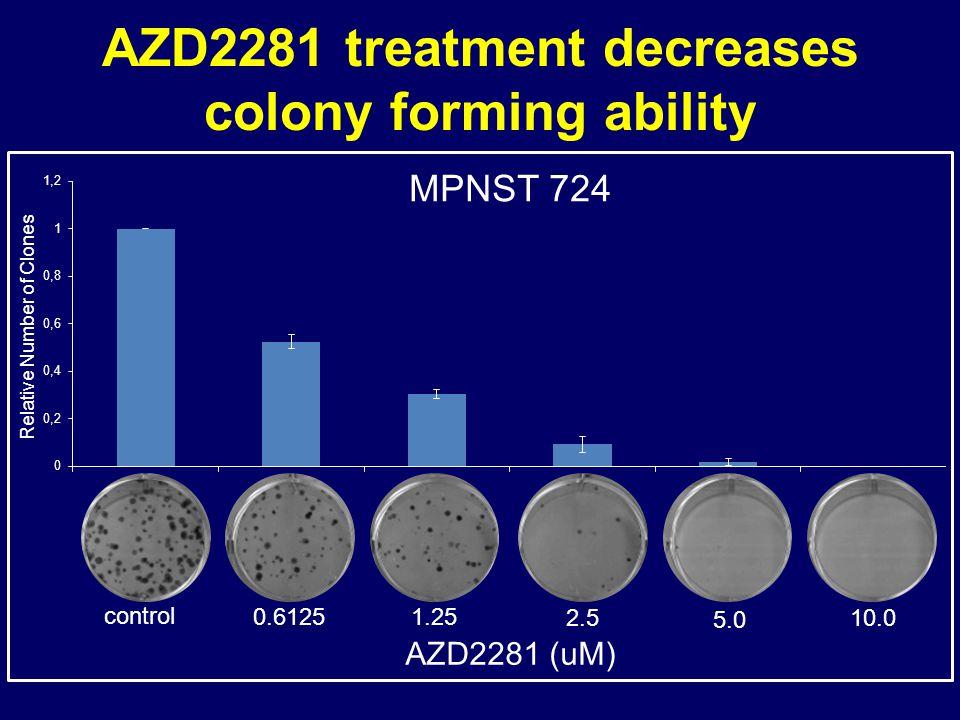 AZD2281 treatment decreases colony forming ability