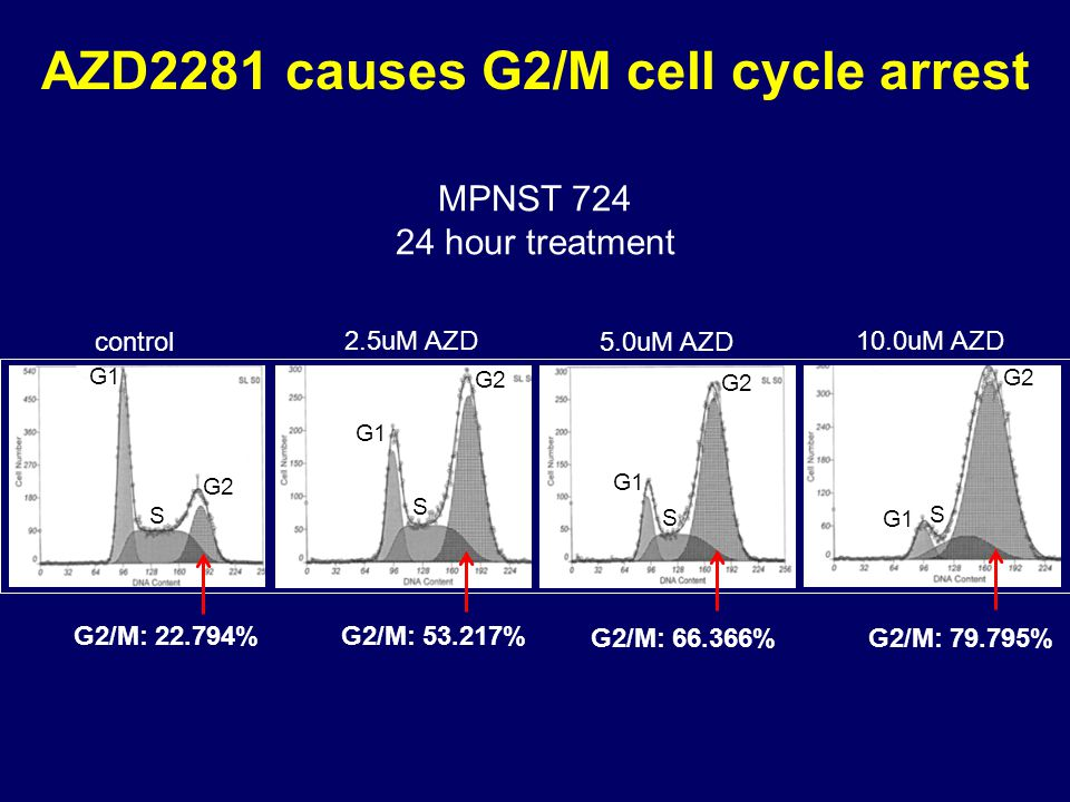 AZD2281 causes G2/M cell cycle arrest