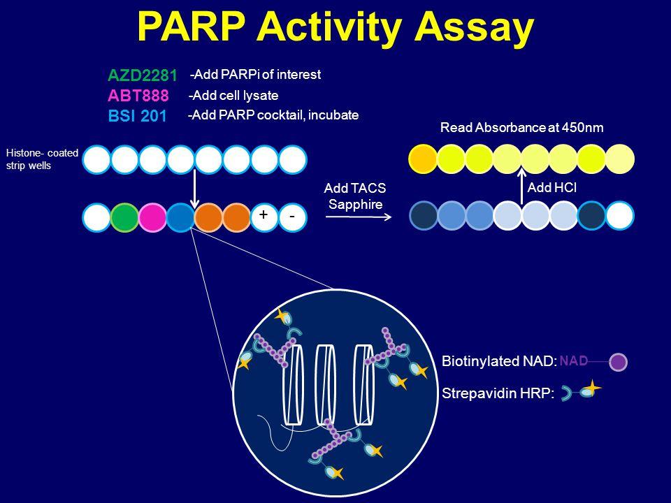 PARP Activity Assay AZD2281 ABT888 BSI 201 + - Biotinylated NAD: