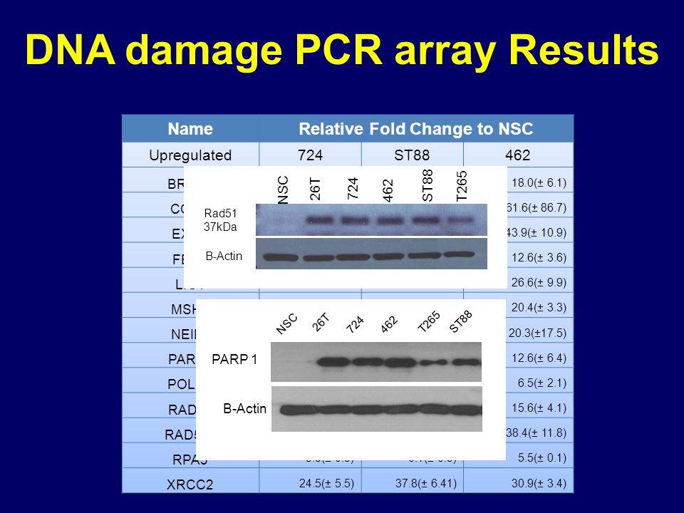 DNA damage PCR array Results