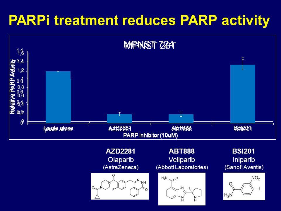 PARPi treatment reduces PARP activity