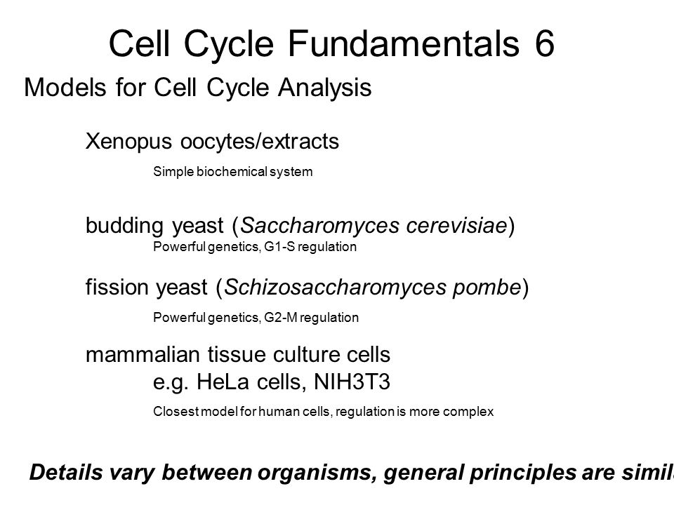 Cell Cycle Fundamentals 6