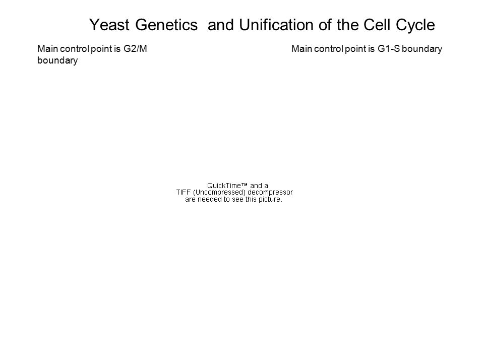 Yeast Genetics and Unification of the Cell Cycle