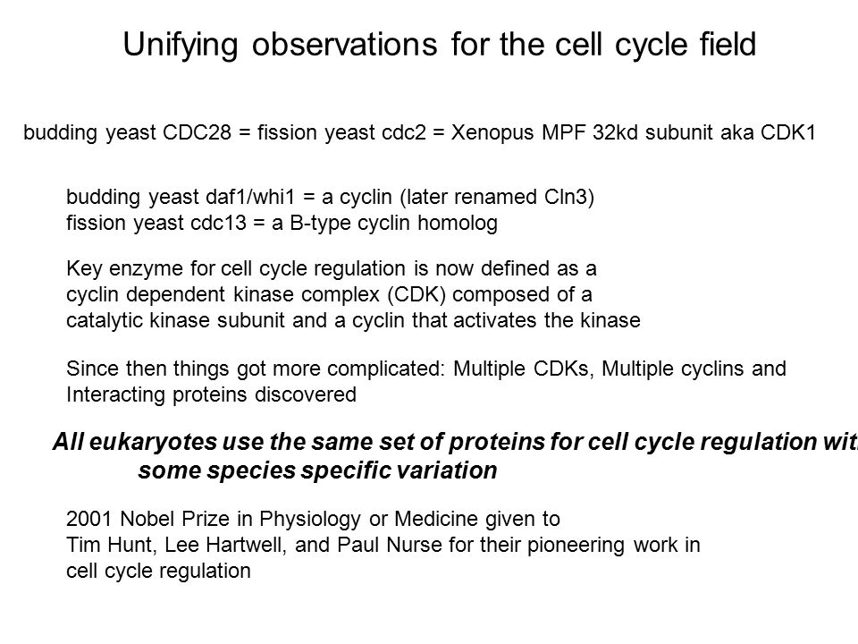 Unifying observations for the cell cycle field