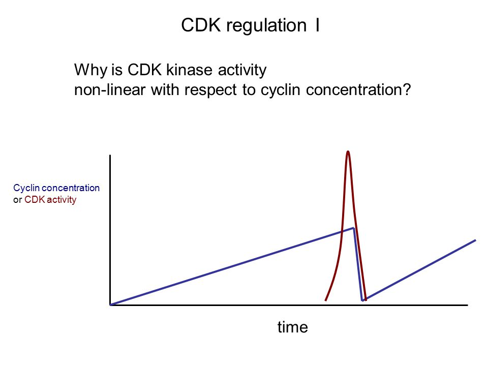 CDK regulation I Why is CDK kinase activity