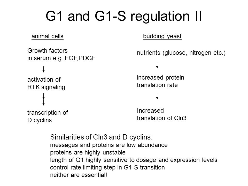 G1 and G1-S regulation II Similarities of Cln3 and D cyclins: