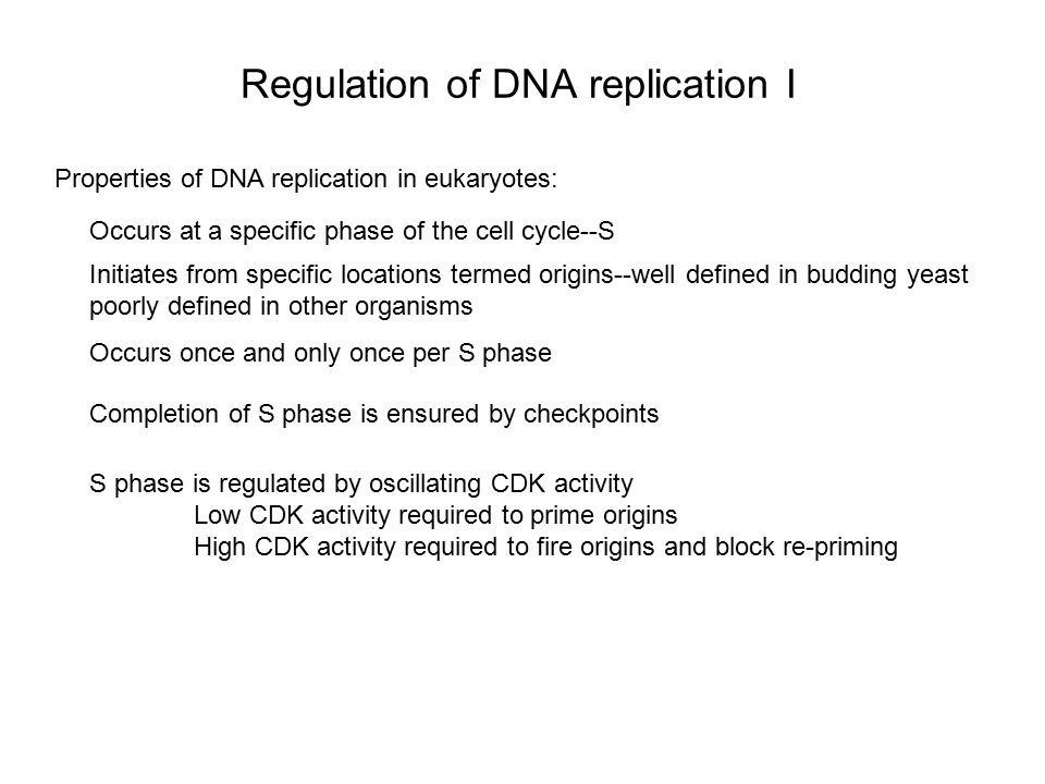 Regulation of DNA replication I