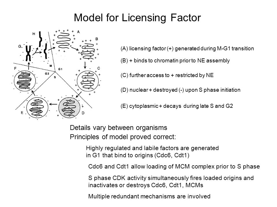 Model for Licensing Factor