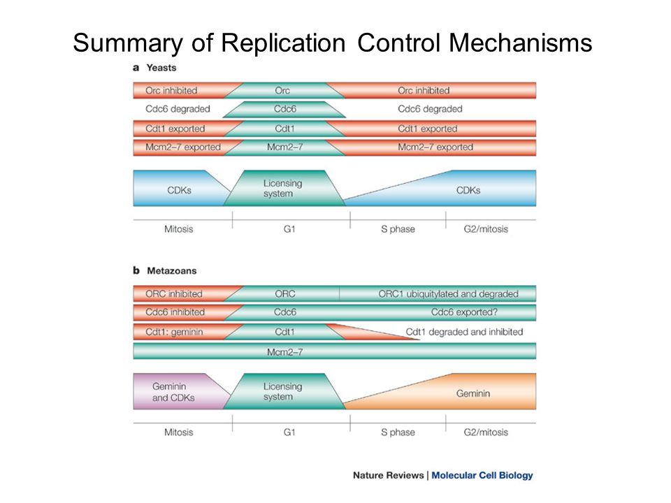 Summary of Replication Control Mechanisms
